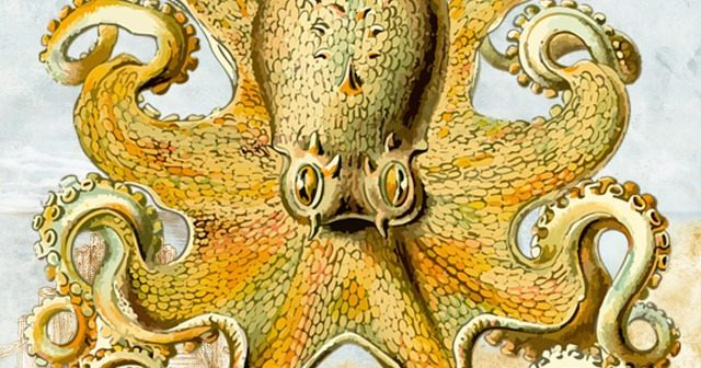 octopus-1653763_640-640×336